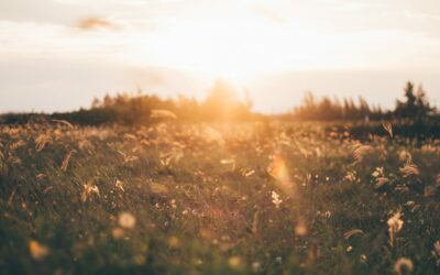 De rol van vitamine D in bescherming tegen Covid-19